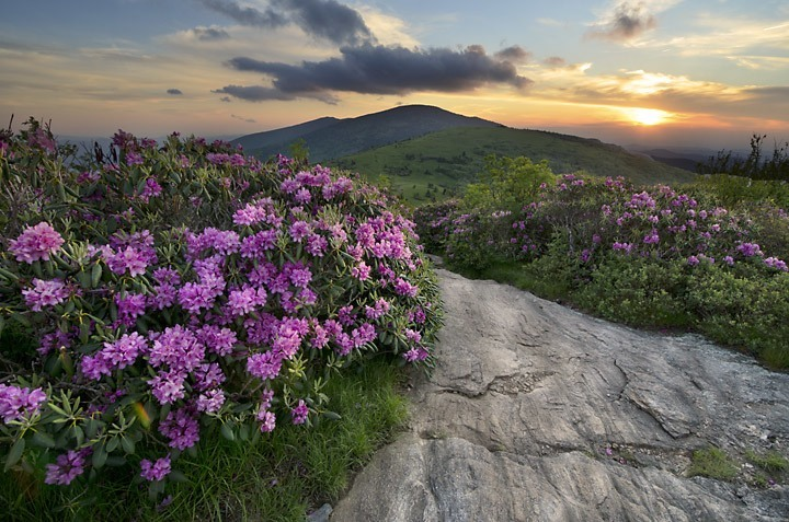 Roan Mountain Rhododendron Report 2016